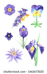 A set of yellow-and-purple isolated watercolor flowers on a white background. Consists of  iris, water lily, pansy, crocus, primrose, blue cow wheat and violet.