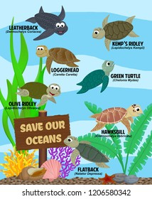 "Seven different sea turtles (Leatherback, Loggerhead, Kemp's Ridley, Green, Olive Ridley, Hawksbill, and Flatback),  swimming amongst plants, shells, corals, and a wood sign saying ""save our oceans"""