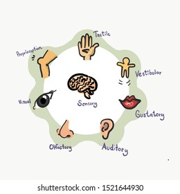 The seven sensory systems. Multiple sensory. Sensory Integration.