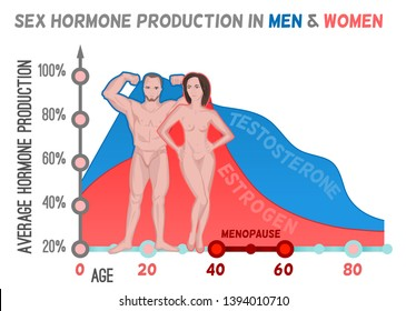 Sex hormone production in men and women. Average percentage from the birth to the age of eighty years. Beautiful  illustration. Medical infographic useful for an educational poster design.