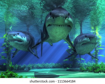 In shallow seas, three very menacing forms emerge from the dark aquatic realm.  The most terrifying creature of the ocean is swimming right towards you: three great white sharks.