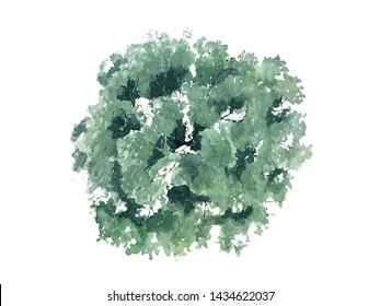The shape of the watercolor tree top view for landscape design