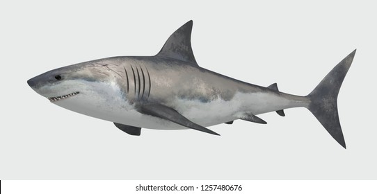 Shark fish isolated on white background. 3d illustration.