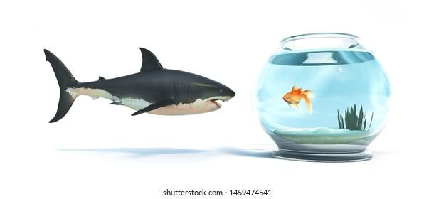 Shark in front of a golden fish in a bowl. 3d render illustration