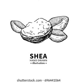 Shea butter drawing. Isolated vintage illustration of nuts, butter and leaves. Organic oil engraved style sketch. Beauty and spa, cosmetic ingredient. Great for label, poster, flyer, packaging design.