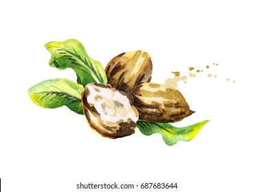 Shea nuts with butter and green leaves. Watercolor hand-drawn illustration