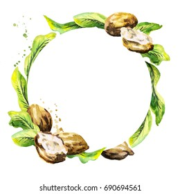 Shea nuts and green leaves circular background. Watercolor hand-drawn  illustration