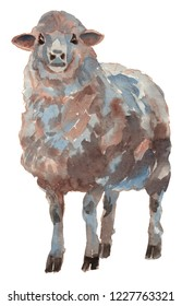 The sheep. Hand painted, isolated on white background watercolor illustration.