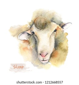 Sheep of hand-painted watercolor illustration. Portrait of farm animals facet. Logo watercolor. Drawn sketch isolated on white background.