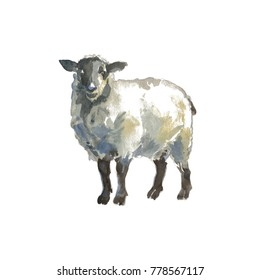 The sheep- isolated hand-painted watercolor animals