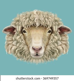 Sheep Portrait. Illustrated Portrait of  Ram or sheep on blue background.