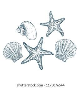Shells and starfish on white background, cartoon illustration.