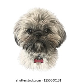 Shih Tzu or Chrysanthemum dog isolated on white background. Realistic Portrait of a Cute puppy. Animal art collection: Dogs. Hand drawn pet illustration. Design template. Good for T-shirt, pillow