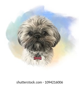 Shih Tzu or Chrysanthemum dog. Realistic Portrait of a Cute puppy on watercolor background. Animal art collection: Dogs. Watercolor hand drawn pet illustration. Good for print T-shirt, pillow, banner