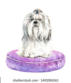 Shih tzu dog. Portrait of a dog. Watercolor hand drawn illustration.Watercolor 	 Shih tzu sitting on pillow layer path, clipping path isolated on white background.