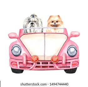 Shih tzu and Pomeranian dog in car . Watercolor hand drawn illustration. Watercolor Shih tzu and Pomeranian  sitting in kid car layer path, clipping path.