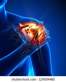 Shoulder pain - Anatomy concept