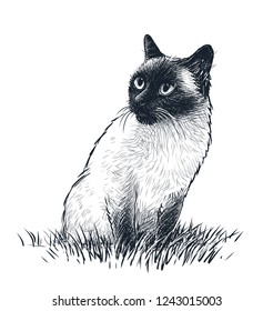 A siamese cat sits in the grass