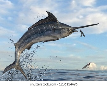 Side view of marlin sailfish catching flying fishes in the air between water splashes 3d Render