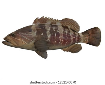 Side view of white great grouper fish with great coloring 3d render