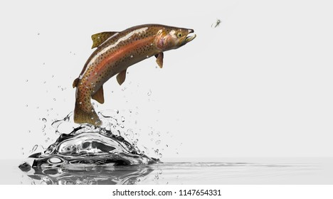 Sideview of a trout fish with flyfishing lure. Fish chasing attractive bait. White background and water splash 3d rendering