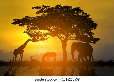 silhouette animals at sunset time
