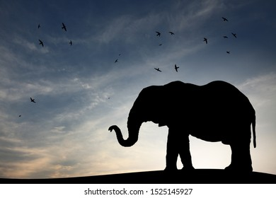 Silhouette of an elephant bull roaming in the savannah against a surreal evening sky.