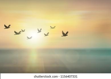 1000 Free Bird Stock Images Photos Vectors Shutterstock