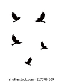 the silhouette of flying birds