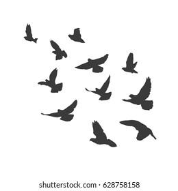 Silhouette flying birds on white background. Pigeons fly. illustration.