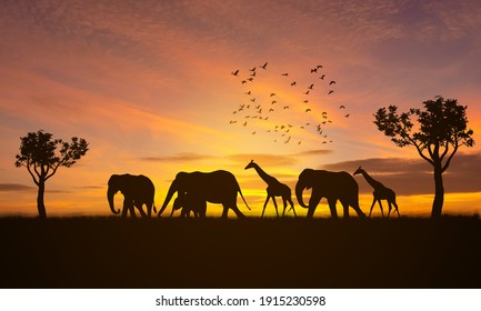 silhouette giraffe and elephant at safari with sunset background, silhouette animal, silhouette elephant,