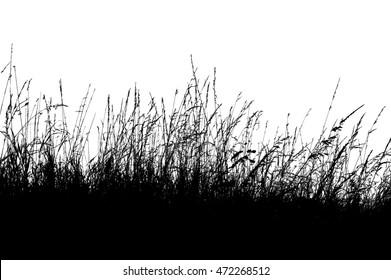 Silhouette grass