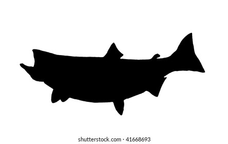 A Silhouette of a Great Lakes Chinook (King) Salmon