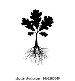 Silhouette of oak tree. Illustration of a silhouette of oak tree on a white background