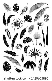 Silhouette palm leaves. Black jungle plants, summer foliage isolated elements exotic floral branches.  monstera plant silhouettes set