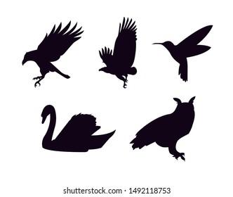 silhouette set of 5 birds: raven, eagle, calibri, swan, owl