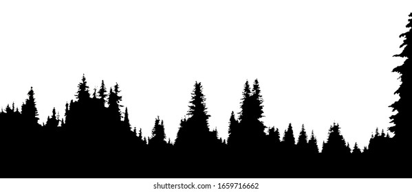 Silhouette of spruce forest on white background