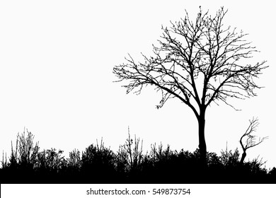 Silhouette of tree, bush with bare branches. Winter scenery trees afar landscape and black space for text, isolated illustration