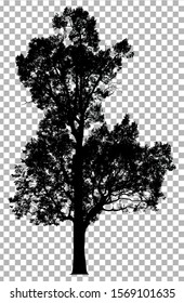 Silhouette tree isolated on transparent background. Clipping path included