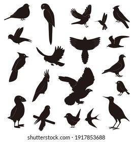Silhouettes Birds Flight Isolated White Background