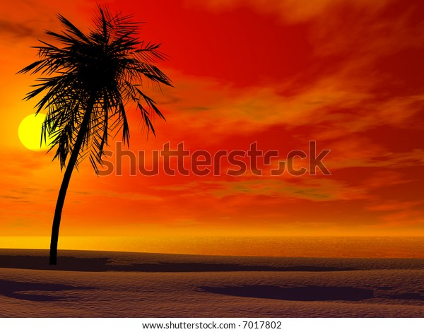 Silhoutte of a palm in sunset