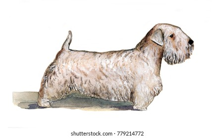 Silichem Terrier painted in watercolor in profile