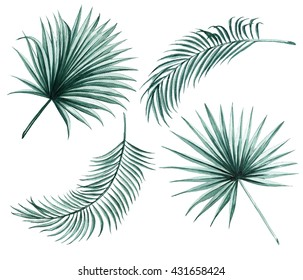 Silk palm and fan palm green leaves tropical exotic watercolor  botany spring summer Hawaii beach , design object print textile backdrop,wallpaper isolated on white background