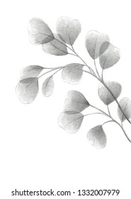 Silver dollar eucalyptus grayscale watercolor illustration with gray eucalyptus tree twig branch with round leaves plant wedding decorative elements or invitation template composition with copy space