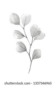 Silver dollar eucalyptus grayscale watercolor illustration with gray eucalyptus tree twig branch with round leaves heart shaped plant wedding decorative elements