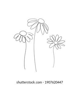 Simple daisy flower line art drawing. Chamomile abstract minimal illustration