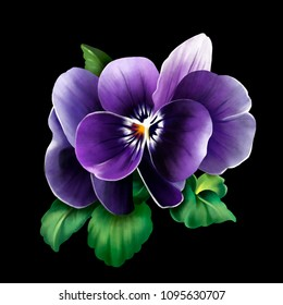Simple and modest, as if from a fairy tale, pansies. Purple pansies on black background