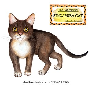 Singapura cat. The cat collection. Watercolor illustration. Cats breed collection. Pet. Illustration for design, decor, printing.