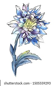 Single blue chrysanthemum on thick stalk with carved leaves isolated on white background. Watercolor hand drawn iimage of beautiful blooming flower. Brush stroke abstract floral illustration.