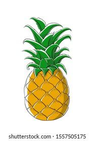 Single pineapple illustration. Hand drawn illustration. White background.